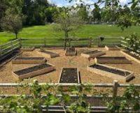 Farm to Table Garden